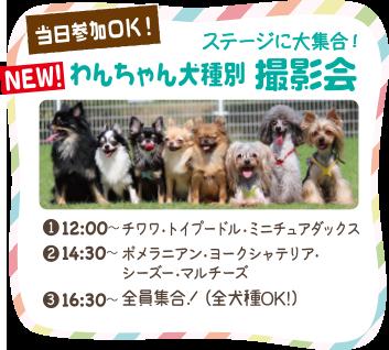 わんちゃん犬種別 撮影会